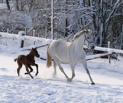 Bezpieczne podłoże dla zwierząt w zimie